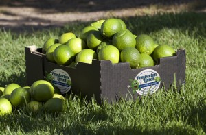 Box of Pemberton Limes